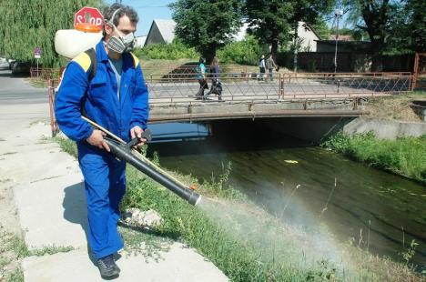 Dezinsecţia împotriva ţânţarilor şi muştelor începe vineri în Oradea