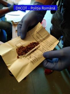 Percheziții în Bihor și în Ungaria: 15 traficanţi de ecstasy şi etnobotanice au fost reţinuţi (FOTO)