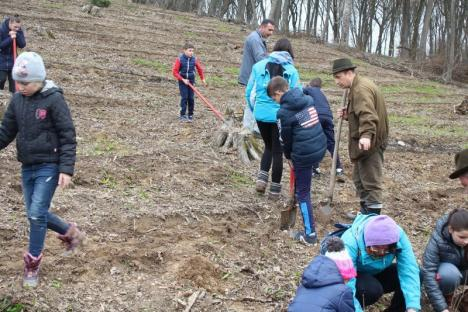 Luna plantării arborilor: Peste o mie de puieţi sădiţi în pădurile din Bihor (FOTO)
