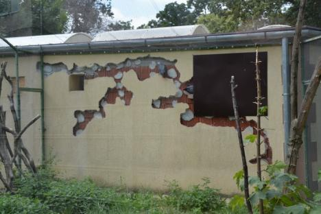 Zoo s-a sălbăticit! Extinsă şi refăcută din temelii acum 4 ani, Grădina Zoologică din Oradea s-a degradat sub ochii celor plătiţi s-o îngrijească (FOTO)