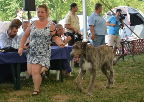 Câinii invadează Cetatea: Peste 1.500 de căţei vor fi prezenţi la Halloween Dog Show