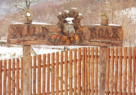 Pesta porcină se extinde: Numărul focarelor din Bihor a ajuns la 50, virusul s-a apropiat de domeniul lui Ţiriac de la Balc