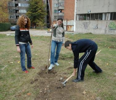 Oradea se înverzeşte cu peste 3.500 de arbori