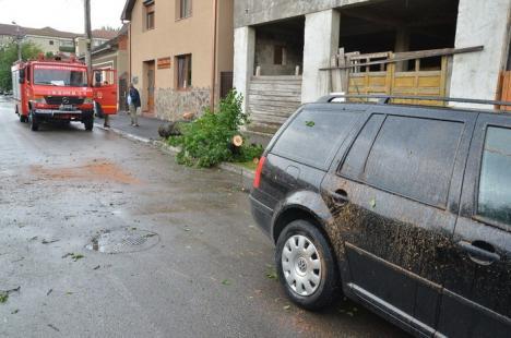 Furtuna în Oradea: Golf avariat, după ce un copac s-a prăbuşit peste el (FOTO)