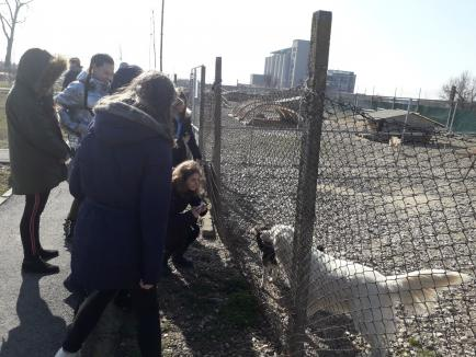 Elevi de la Școala Nicolae Bălcescu, în vizită la Adăpostul Grivei (FOTO)