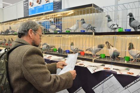 Oameni şi păsări: Expoziţia Naţională de Columbofilie de la Oradea a adunat în prima zi peste 1000 de pasionaţi şi curioşi (FOTO)