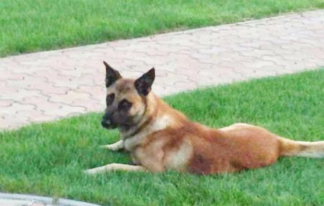 Se oferă recompensă! Doi câini au fost pierduți de o familie din Oradea