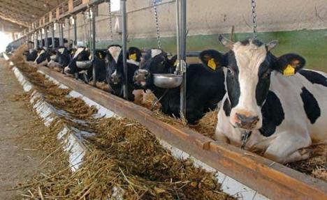 Rusia interzice importul de carne de vită din România, invocând boala vacii nebune