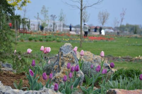 Festivalul primăverii, în Bihor: 20.000 de lalele, multă culoare și muzică bună, la Lavender Farm (FOTO / VIDEO)