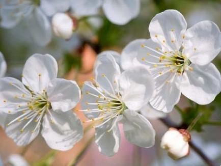 Floriile, sărbătoarea intrării lui Iisus în Ierusalim, dar şi a celor cu nume de flori