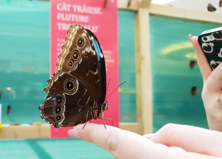 Super-expoziţia de fluturi tropicali vii revine la ERA Park Oradea!