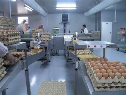 Agricultura bihoreană, prima în țară la atragerea de fonduri europene. Proiecte de 303 milioane euro în șase ani (FOTO)