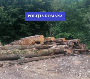 Acţiune amplă în zona Aleşd: Amenzi de aproape 90.000 de lei şi aproape 100 metri cubi de lemne confiscate
