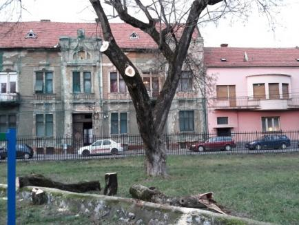 Au minţit: Defrişările din Parcul Bălcescu nu au avizul APM Bihor! Garda de Mediu a sistat orice tăiere (FOTO)
