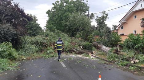 Un copac a căzut peste o maşină aflată în trafic, în Oradea (FOTO / VIDEO)