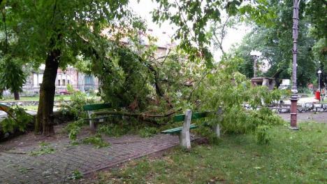 Furtună peste Oradea: Ploaia şi vijelia au inundat străzi şi au doborât copaci cu nemiluita (FOTO/VIDEO)
