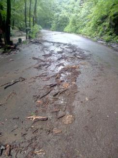 Urmările codului portocaliu în Bihor: Aluviuni pe șosele și copaci căzuți (FOTO / VIDEO)