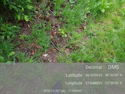 Loc de pândă amenajat ilegal de braconieri, într-un fond de vânătoare din Boga, gestionat de Universitatea din Oradea (FOTO)