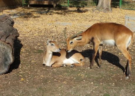 ADP Oradea închiriază spațiu comercial în Grădina Zoologică