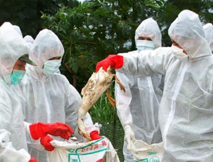Atenție la gripa aviară! Trei depozite din Bihor au primit carne de la ferme de păsări din Ungaria, aflate în zona de restricție din cauza virusului