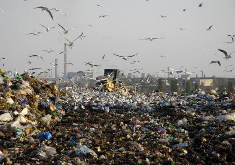 ADIo Ecolect: Primăria Borș vrea să iasă din sistemul integrat de colectare a deșeurilor