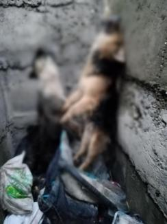 Descoperire groaznică în Bihor: O groapă 'a morţii', cu câini abandonaţi şi ucişi, între Oradea și Salonta (FOTO)