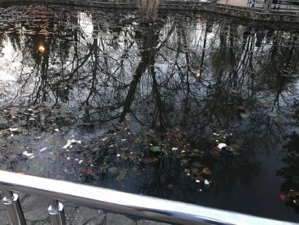 Staţiunea gunoaielor: În Băile Felix, mizeriile dau pe-afară (FOTO)