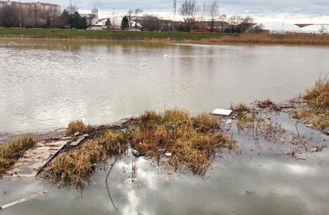Gunoiul doare! Apele din Bihor sunt pline de PET-uri, cârpe şi deşeuri menajere