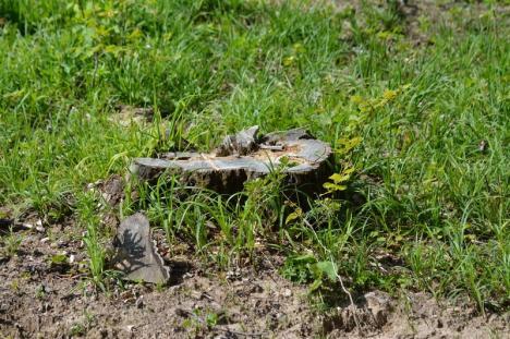'Haiducie' cu voie de la Primărie: Primăriţa din Brusturi acoperă un furt de pădure în care e implicat propriul soţ (FOTO)