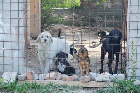 Haita Raksi: Un cuplu din Salonta îngrijeşte peste 180 de câini abandonaţi, într-un adăpost privat amenajat la marginea oraşului (FOTO / VIDEO)