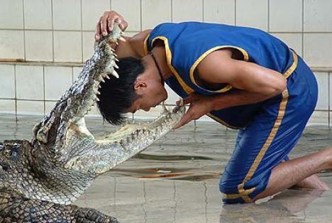 Se joacă cu capul în gura crocodilului
