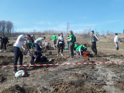 Cea mai mare împădurire din Bihor: 18.000 de puieți au fost plantaţi în Sârbi! (FOTO / VIDEO)