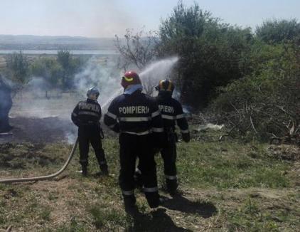 Opt incendii produse în opt ore, în Bihor. Peste 100 de pomi fructiferi s-au făcut scrum