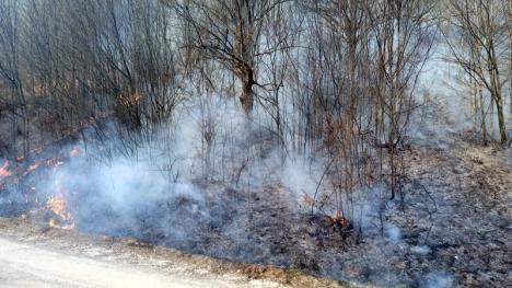 Foc în pădurea din Budureasa: Mai mulţi arbori s-au făcut scrum (FOTO / VIDEO)
