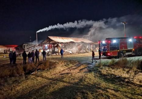 Incendiu devastator, la Sântandrei: O casă a ars din temelii! (VIDEO)