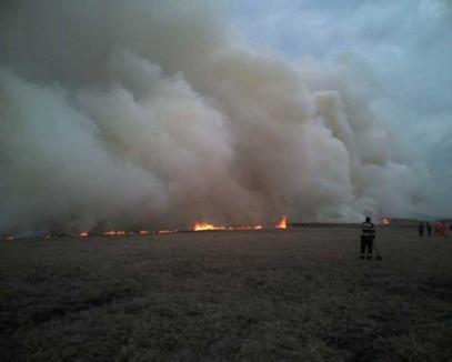 Cinci hectare de vegetaţie uscată şi livadă au ars lângă Oradea