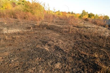 Incendiu în cimitirul evreiesc din Oradea. Un bărbat a fost internat în spital cu arsuri de gradul II (FOTO / VIDEO)