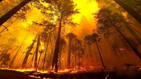 Îngrijorător: Record de păduri incendiate, în 2016, pe mapamond