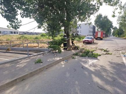 14 copaci doborâţi de vântul puternic şi un incendiu provocat de trăsnet, în Bihor (FOTO / VIDEO)