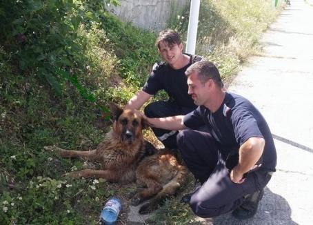 L-au salvat pe 'Grivei'! Un câine blocat în Crişul Repede a fost scos în siguranţă de pompieri