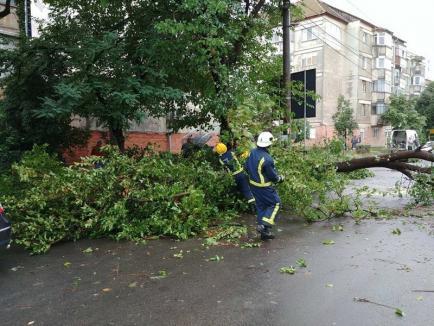 40 de apeluri la 112 după furtuna din Oradea: Doi copaci doborâţi de furtună au aterizat pe maşini
