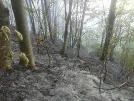 Intervenţie de 7 ore a pompierilor bihoreni, pentru stingerea unui incendiu izbucnit într-o pădure din Munteni (FOTO)