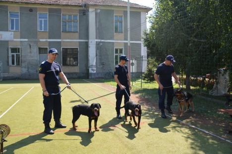 Noi 'angajaţi' la Jandarmeria Bihor: doi căţei rottweiler vor însoţi jandarmii în misiuni (FOTO/VIDEO)