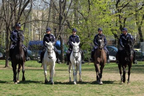 Pentru Centenarul Oradiei vin din Bucureşti ministrul Apărării şi nouă cupluri ecvestre ale Jandarmeriei