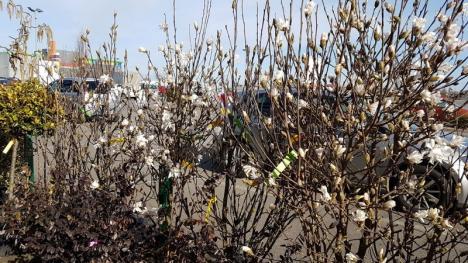 Kaluna: oferte de primăvară irezistibile! (FOTO)