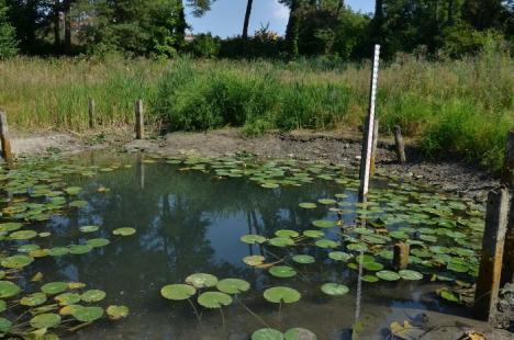 Se caută custozi pentru zece arii protejate din Bihor, inclusiv pentru rezervaţia Peţea