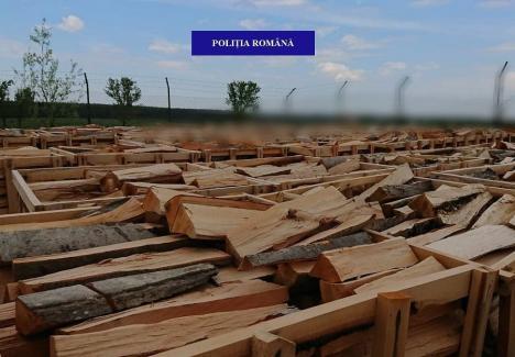 Poliţiştii de la Delicte Silvice au descins în zona Beiuş: Amendă pentru o firmă prinsă că livra lemne fără acte de provenienţă