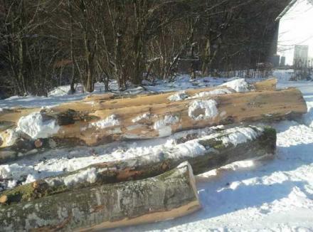 Doi săteni din Pietroasa, prinşi la furat de lemne din zona protejată