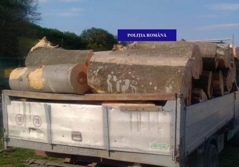 Poliţiştii de la Delicte Silvice au 'periat' şoselele din Bihor: Ce captură au făcut în 24 de ore (FOTO)