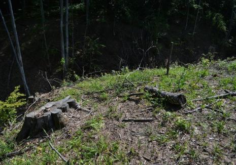 Hoţ de lemne, prins în flagrant în pădurea din Gepiş. Poliţiştii i-au deschis dosar penal